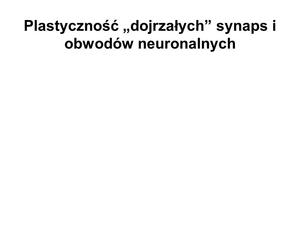 """Plastyczność """"dojrzałych synaps i obwodów neuronalnych"""