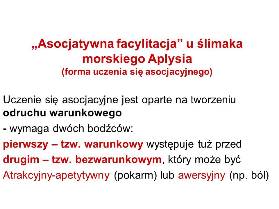 """""""Asocjatywna facylitacja u ślimaka morskiego Aplysia (forma uczenia się asocjacyjnego)"""