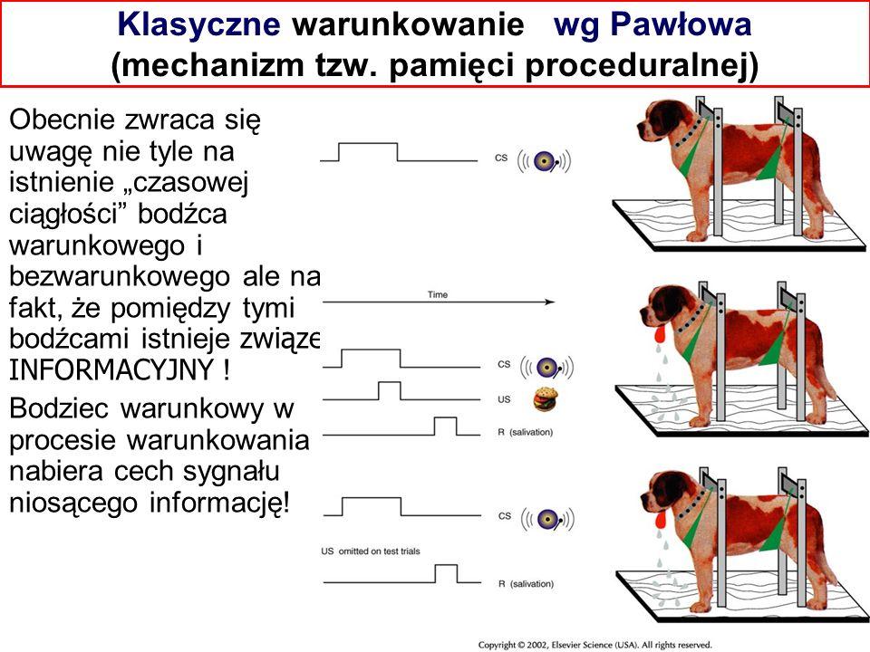Klasyczne warunkowanie wg Pawłowa (mechanizm tzw