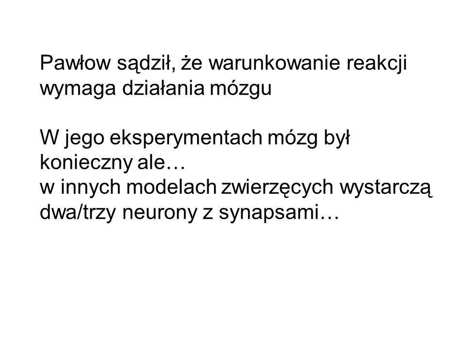 Pawłow sądził, że warunkowanie reakcji wymaga działania mózgu W jego eksperymentach mózg był konieczny ale… w innych modelach zwierzęcych wystarczą dwa/trzy neurony z synapsami…