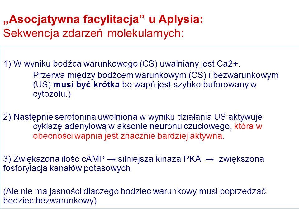 """""""Asocjatywna facylitacja u Aplysia: Sekwencja zdarzeń molekularnych:"""