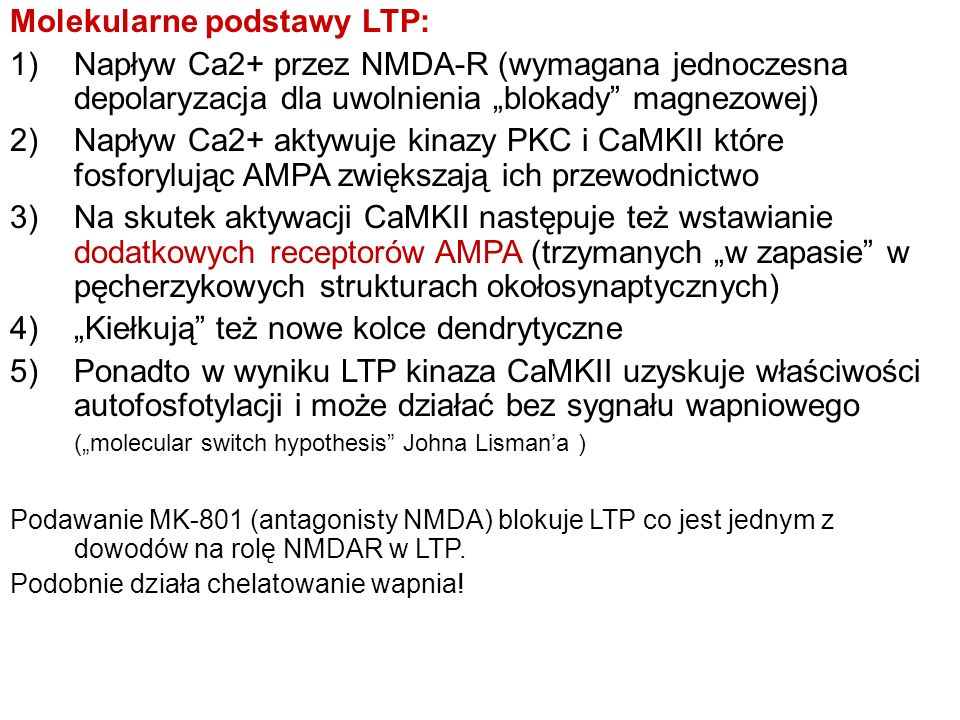 Molekularne podstawy LTP: