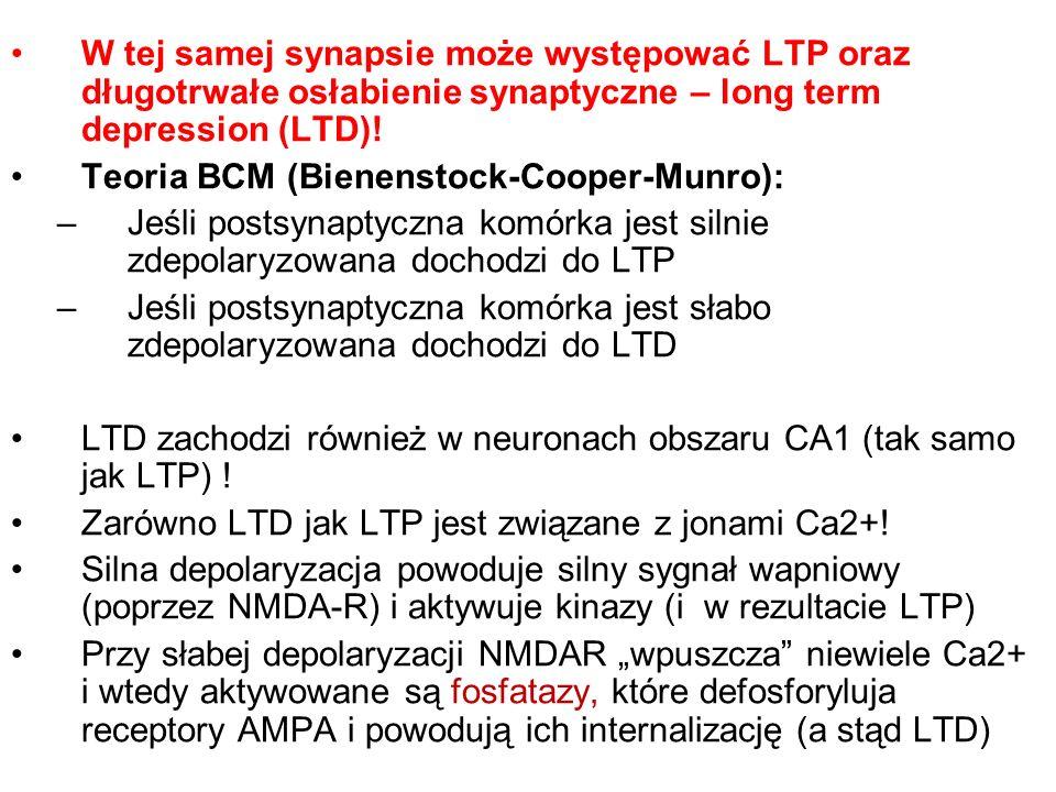 W tej samej synapsie może występować LTP oraz długotrwałe osłabienie synaptyczne – long term depression (LTD)!