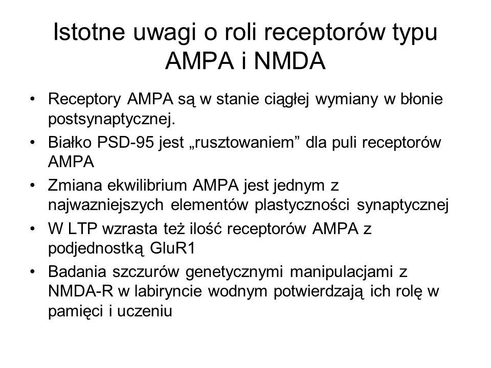 Istotne uwagi o roli receptorów typu AMPA i NMDA