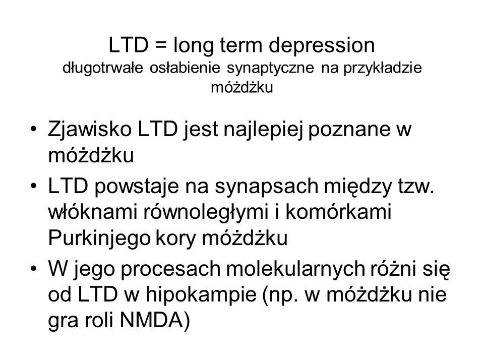 LTD = long term depression długotrwałe osłabienie synaptyczne na przykładzie móżdżku