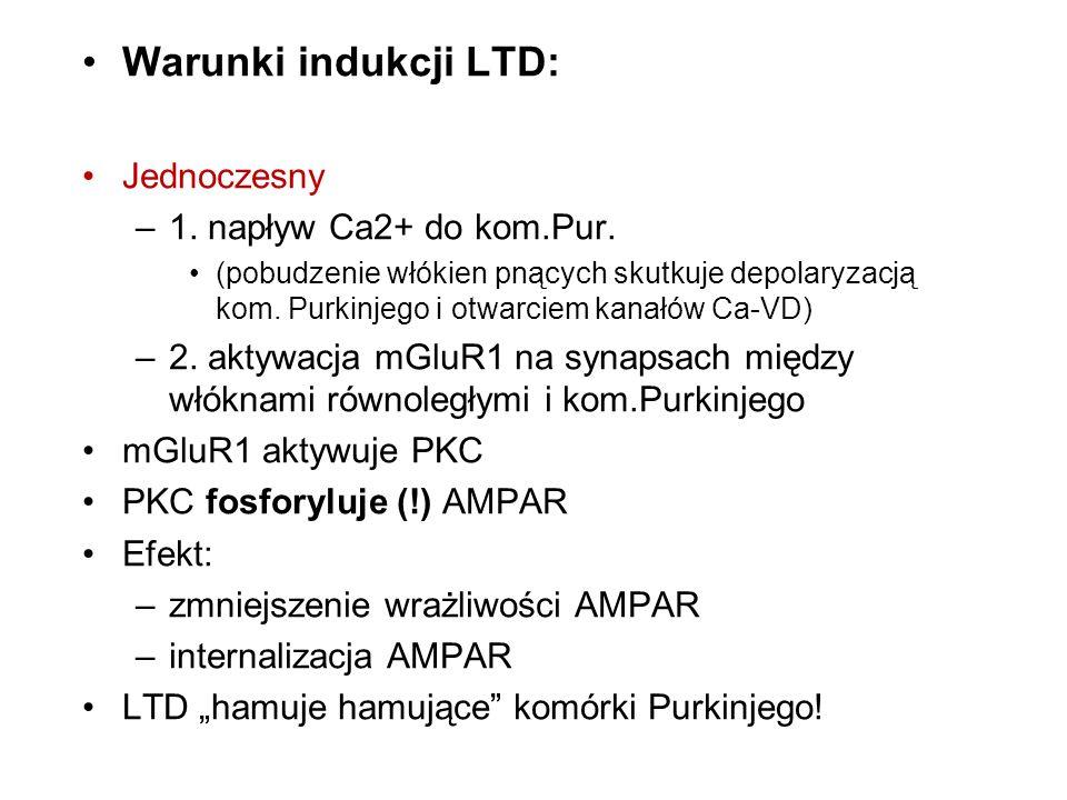 Warunki indukcji LTD: Jednoczesny 1. napływ Ca2+ do kom.Pur.