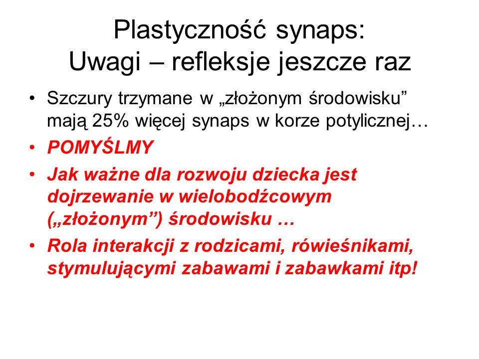 Plastyczność synaps: Uwagi – refleksje jeszcze raz