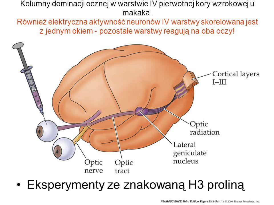 Eksperymenty ze znakowaną H3 proliną