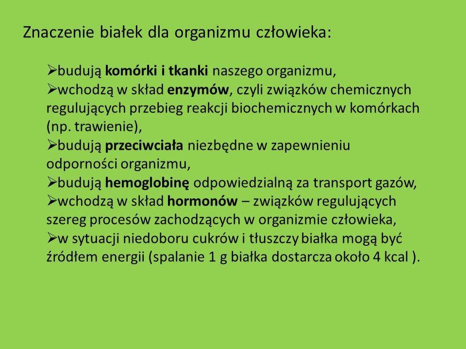 Znaczenie białek dla organizmu człowieka: