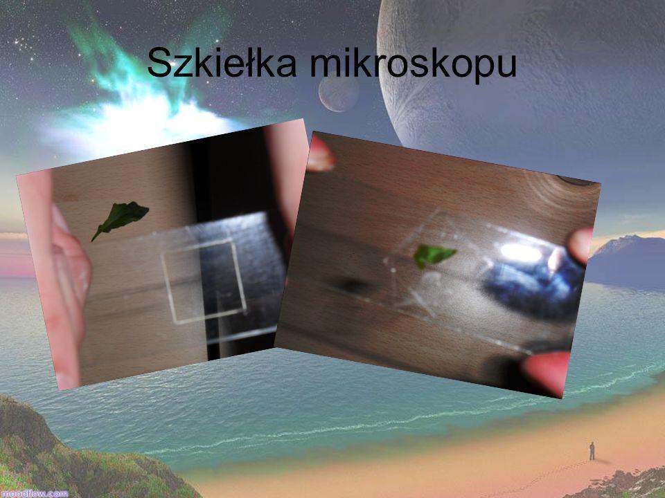 Szkiełka mikroskopu