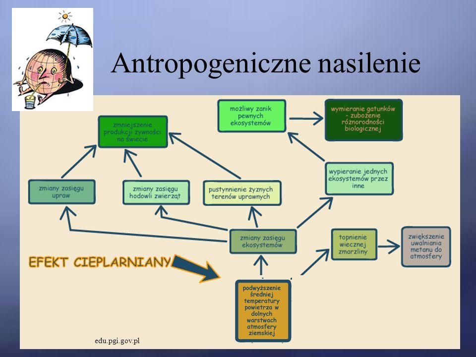 Antropogeniczne nasilenie