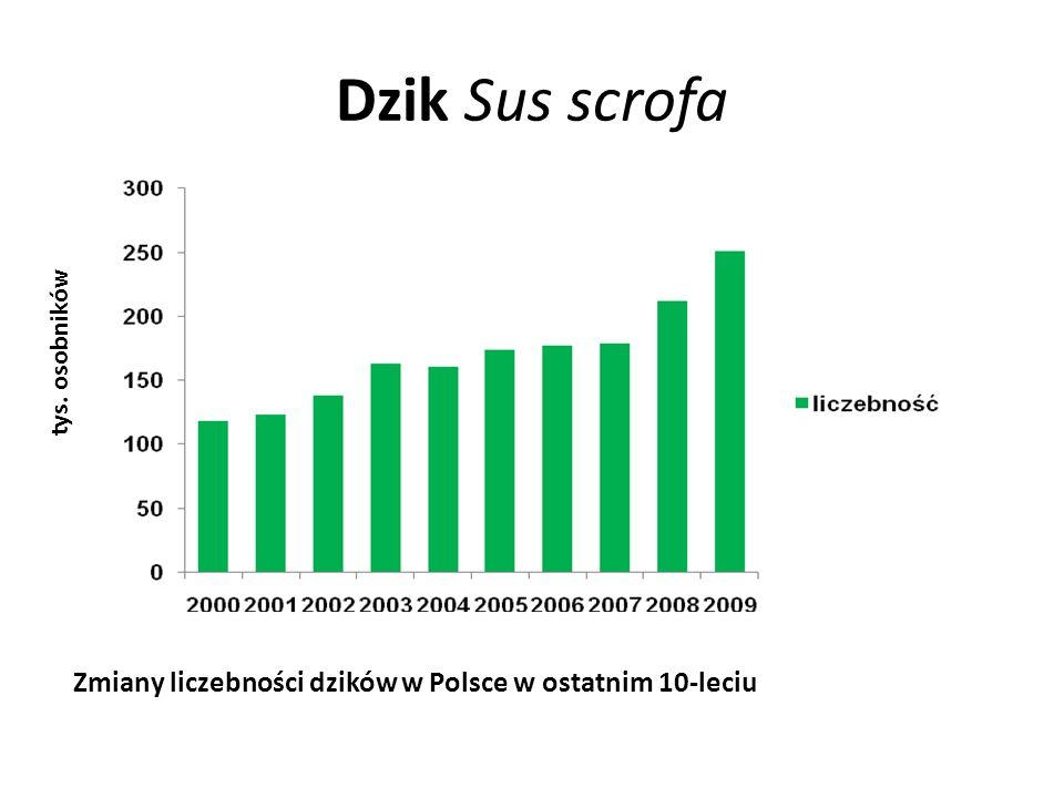 Dzik Sus scrofa Zmiany liczebności dzików w Polsce w ostatnim 10-leciu