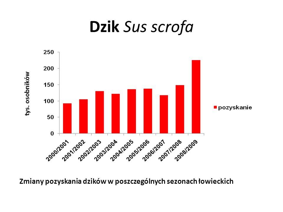 Dzik Sus scrofa tys. osobników Zmiany pozyskania dzików w poszczególnych sezonach łowieckich