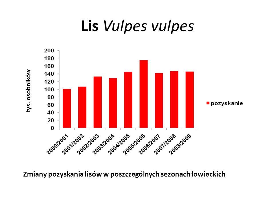 Lis Vulpes vulpes tys. osobników Zmiany pozyskania lisów w poszczególnych sezonach łowieckich