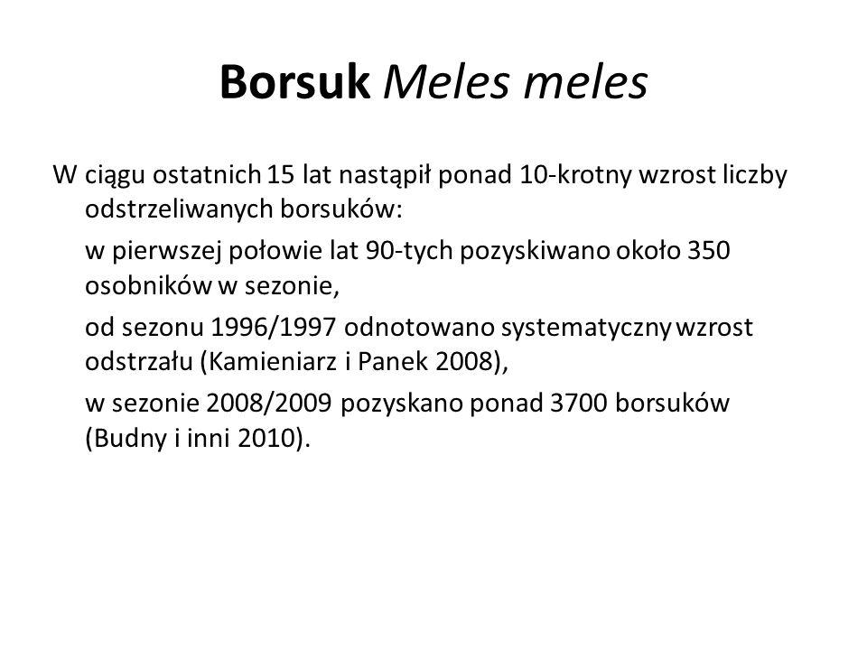 Borsuk Meles meles W ciągu ostatnich 15 lat nastąpił ponad 10-krotny wzrost liczby odstrzeliwanych borsuków:
