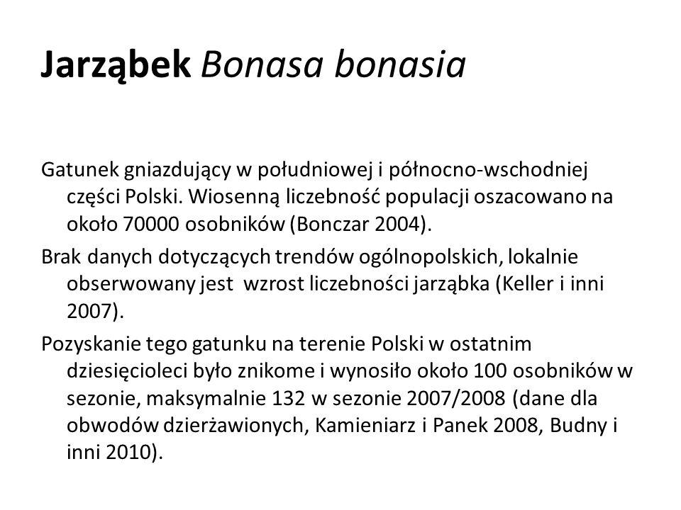 Jarząbek Bonasa bonasia