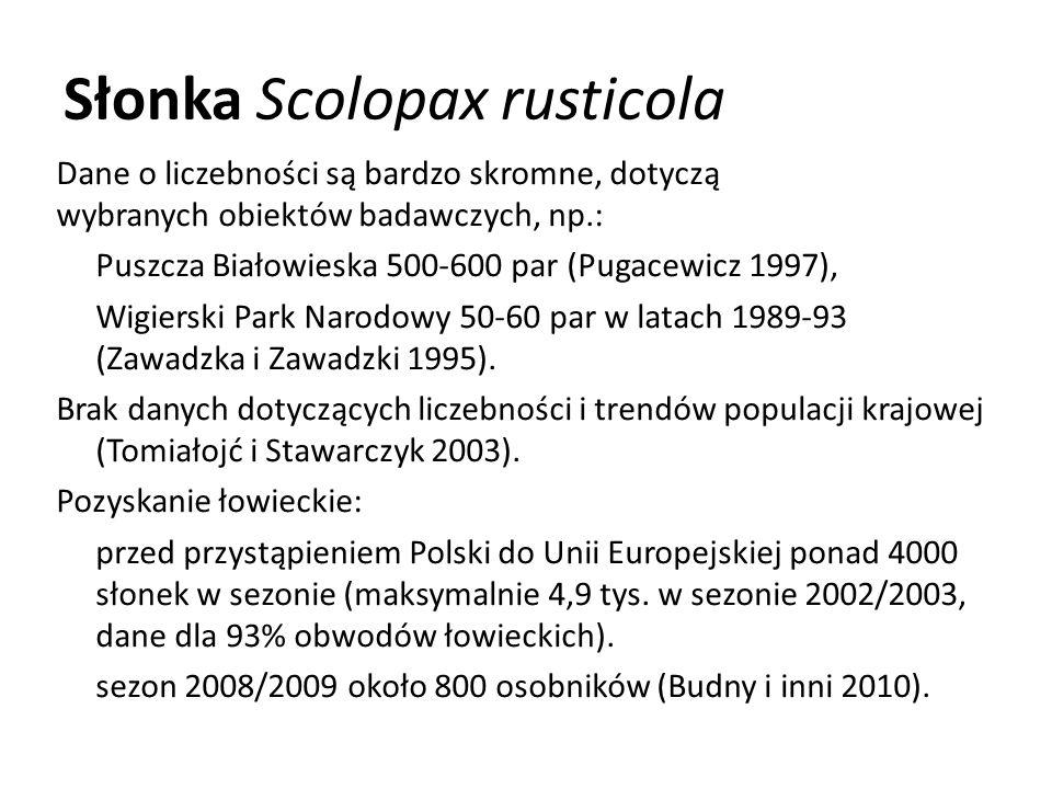 Słonka Scolopax rusticola