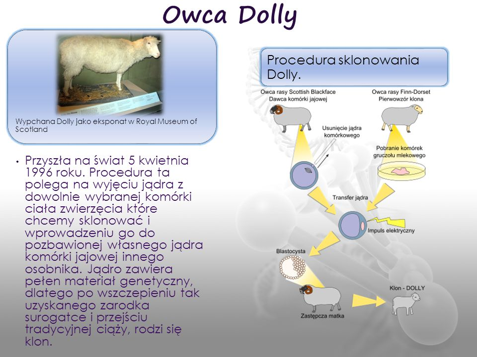 Owca Dolly Procedura sklonowania Dolly.