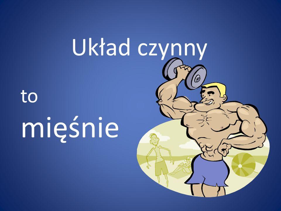 Układ czynny to mięśnie