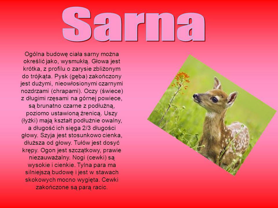 Sarna