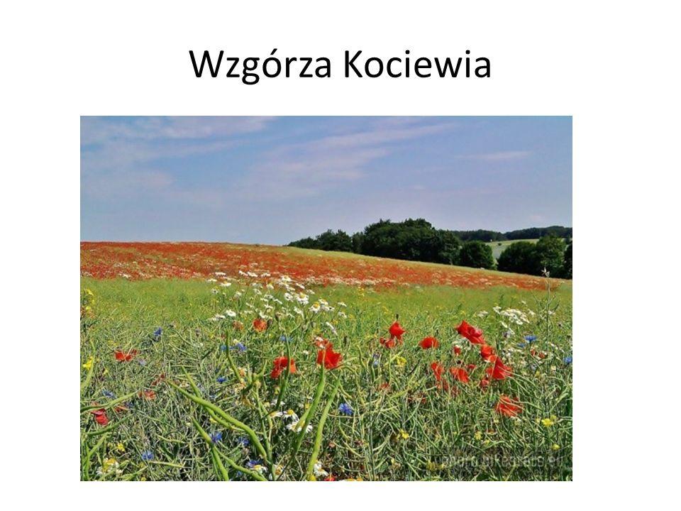 Wzgórza Kociewia