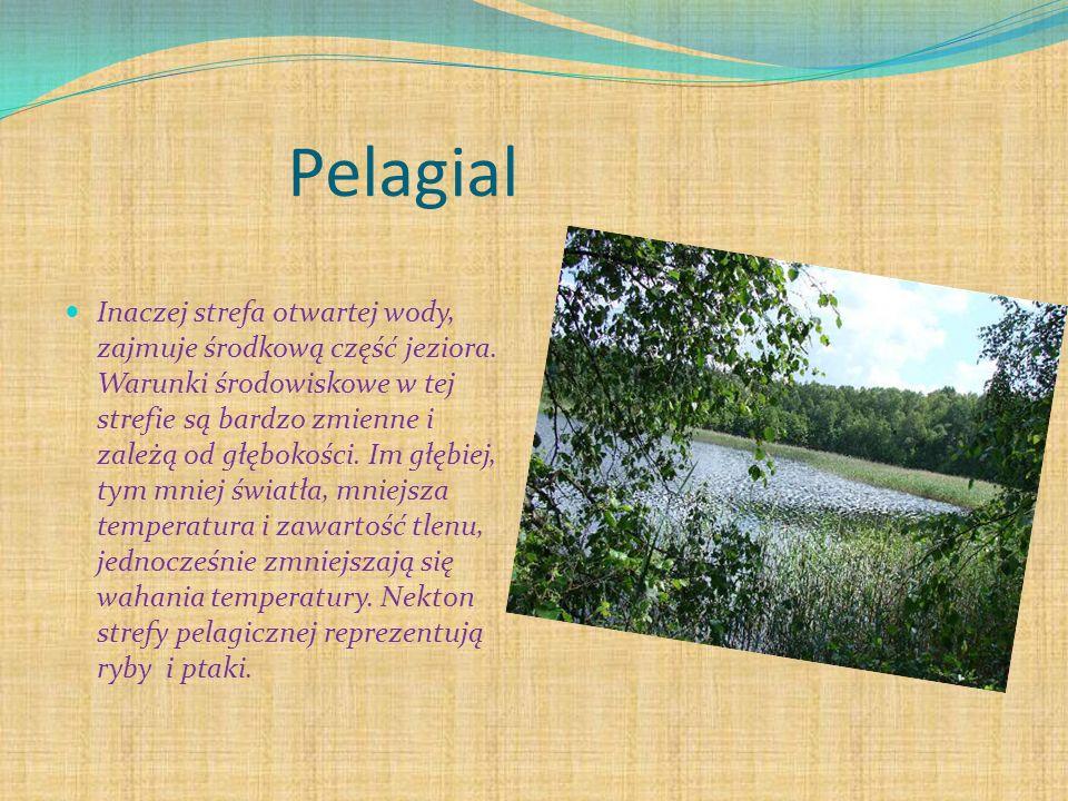 Pelagial