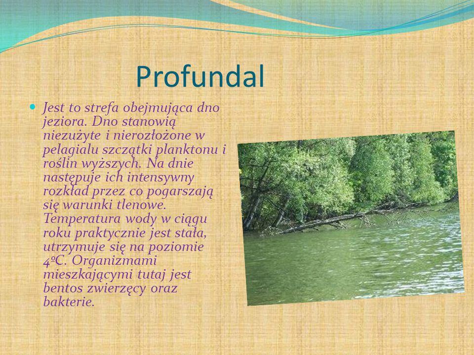 Profundal
