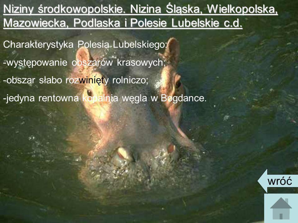Niziny środkowopolskie