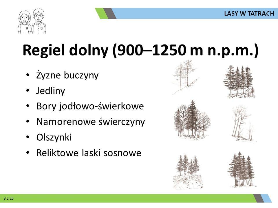 Regiel dolny (900–1250 m n.p.m.) Żyzne buczyny Jedliny