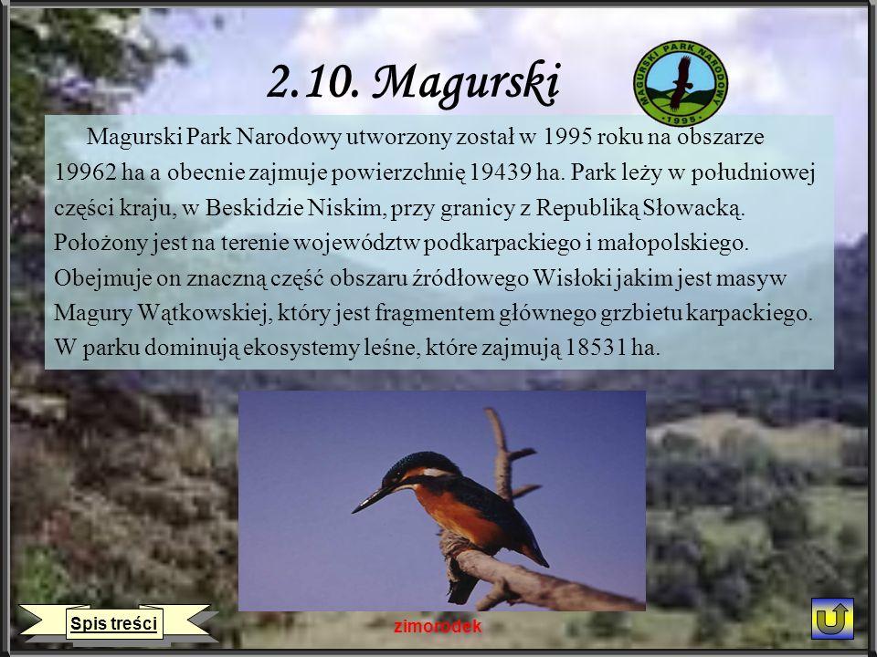 2.10. Magurski Magurski Park Narodowy utworzony został w 1995 roku na obszarze.