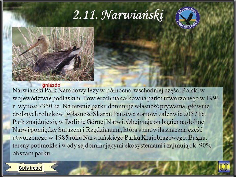 2.11. Narwiański gniazdo. Narwiański Park Narodowy leży w północno-wschodniej części Polski w.