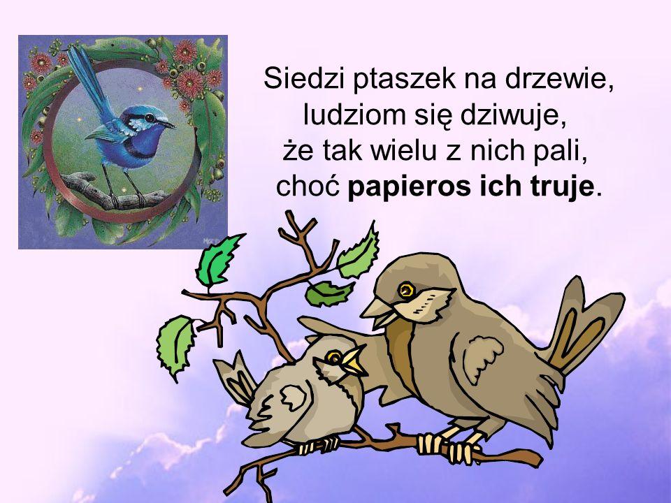 Siedzi ptaszek na drzewie, ludziom się dziwuje,