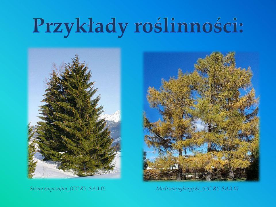 Przykłady roślinności: