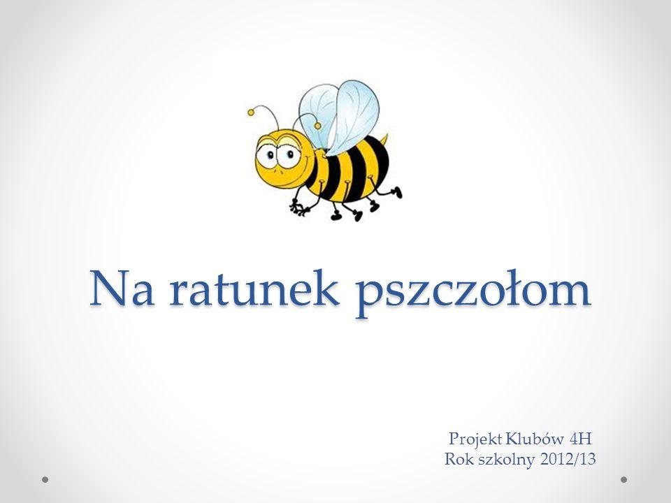 Na ratunek pszczołom Projekt Klubów 4H Rok szkolny 2012/13