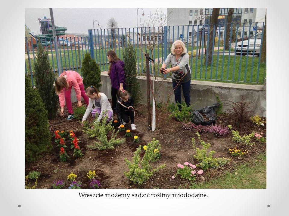 Wreszcie możemy sadzić rośliny miododajne.
