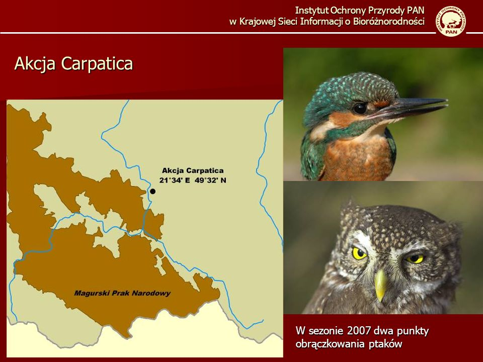 Akcja Carpatica W sezonie 2007 dwa punkty obrączkowania ptaków