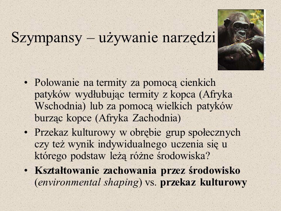 Szympansy – używanie narzędzi