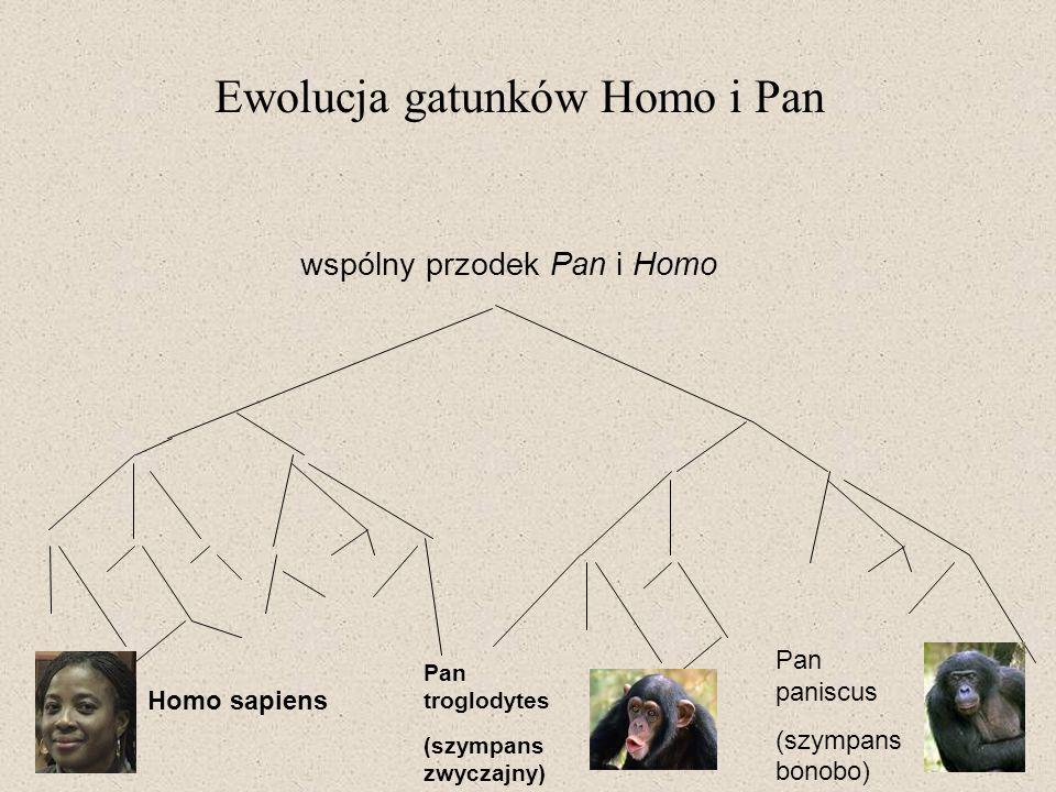 Ewolucja gatunków Homo i Pan