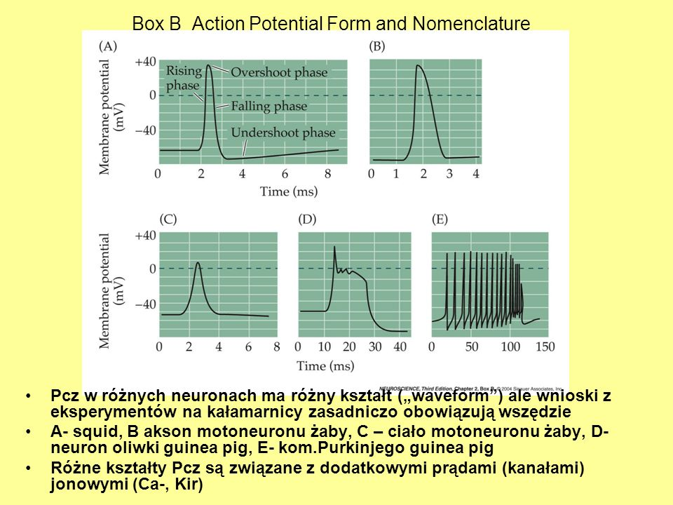 Box B Action Potential Form and Nomenclature