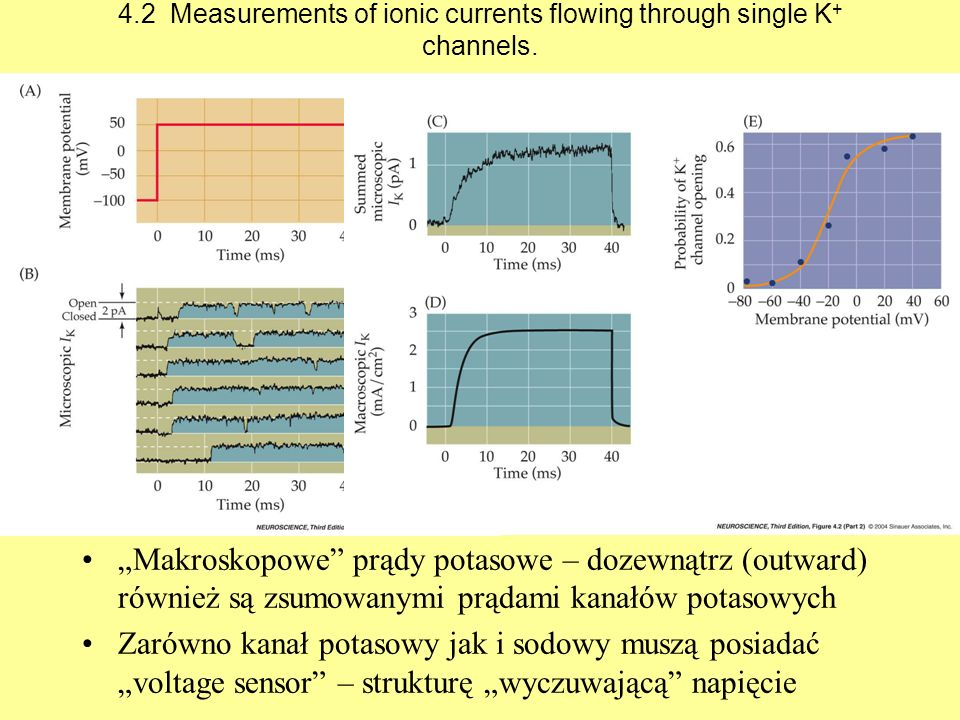 4.2 Measurements of ionic currents flowing through single K+ channels.