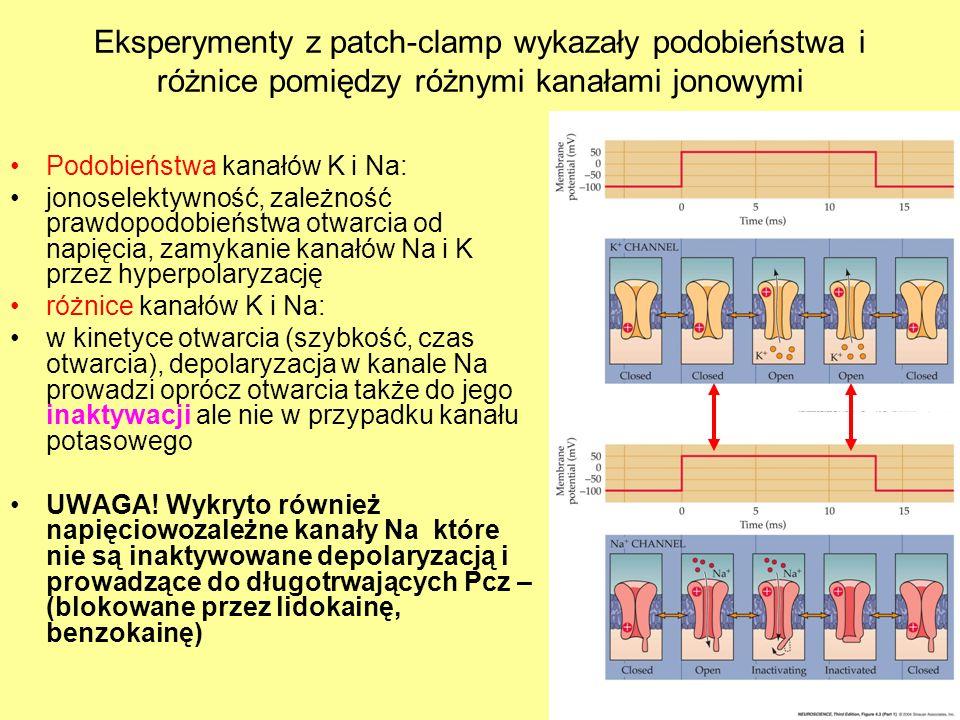 Eksperymenty z patch-clamp wykazały podobieństwa i różnice pomiędzy różnymi kanałami jonowymi