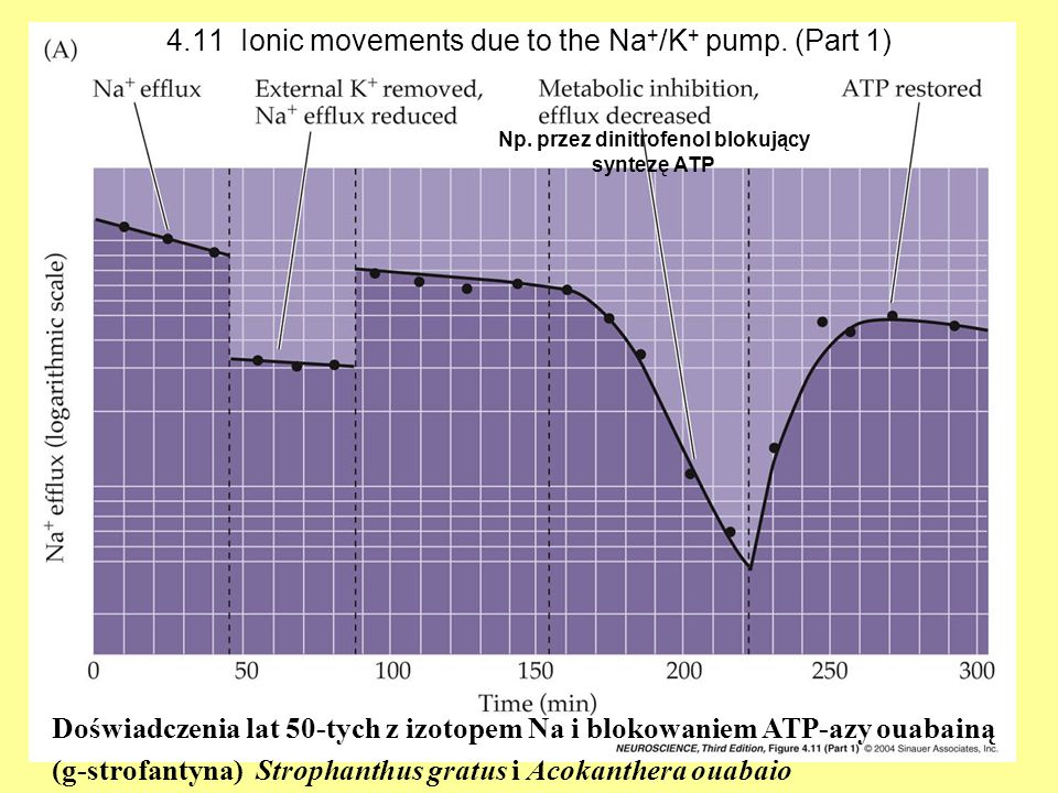 4.11 Ionic movements due to the Na+/K+ pump. (Part 1)
