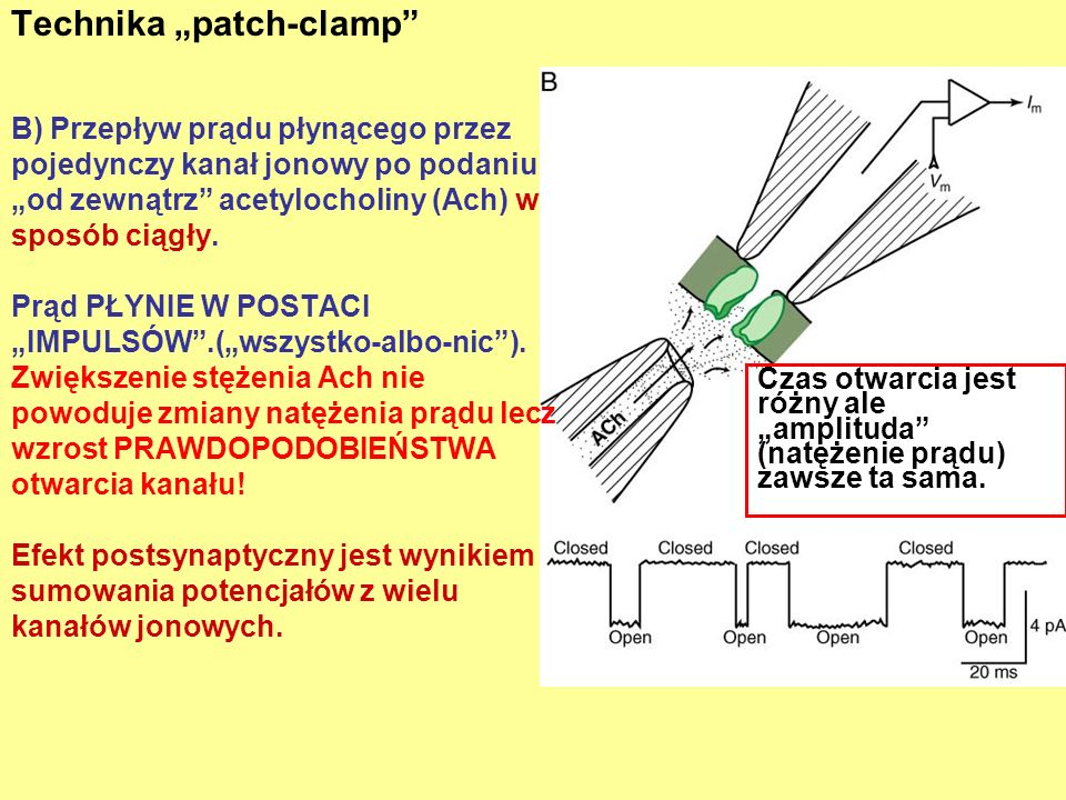 "Technika ""patch-clamp"