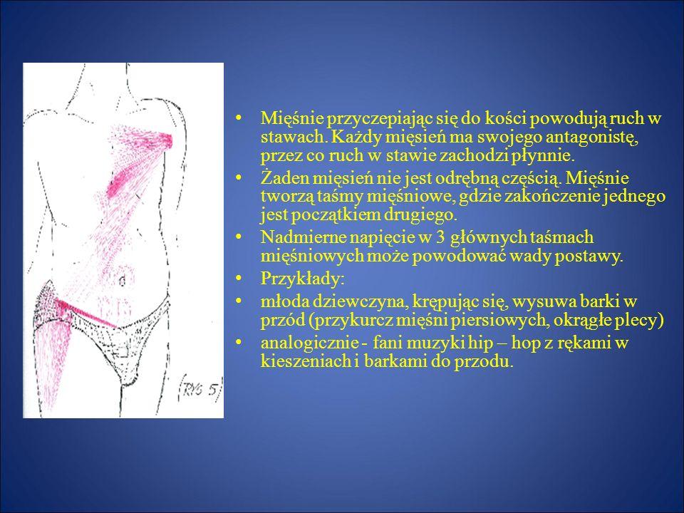 Mięśnie przyczepiając się do kości powodują ruch w stawach