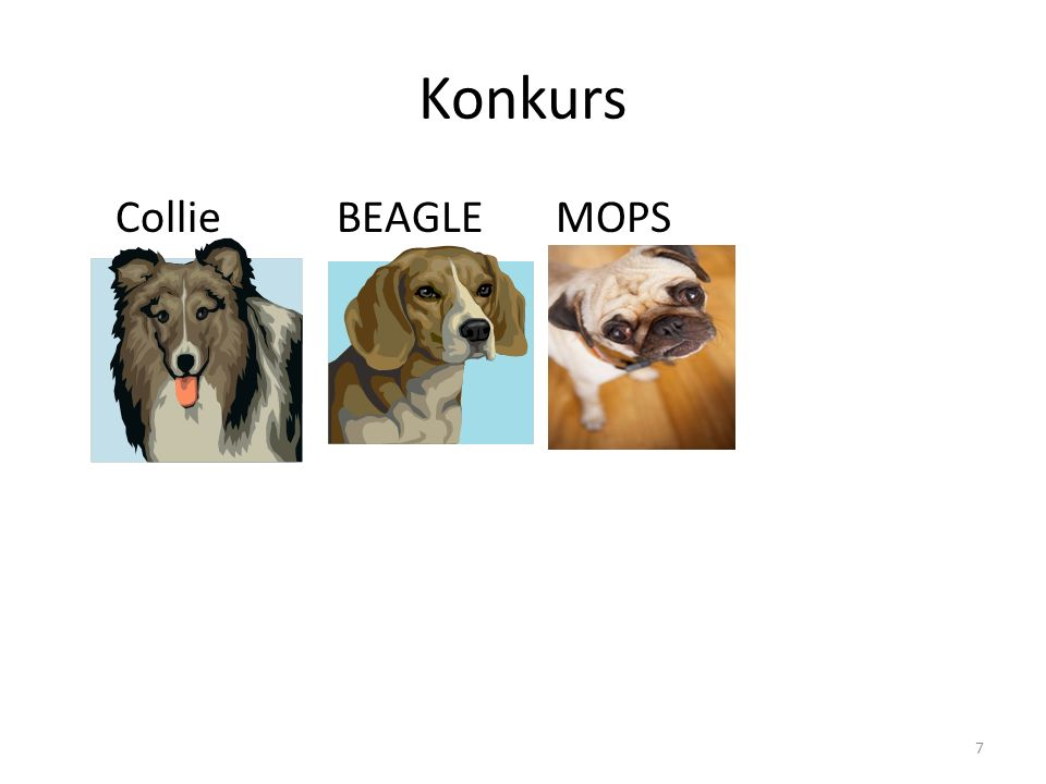 Konkurs Collie BEAGLE MOPS