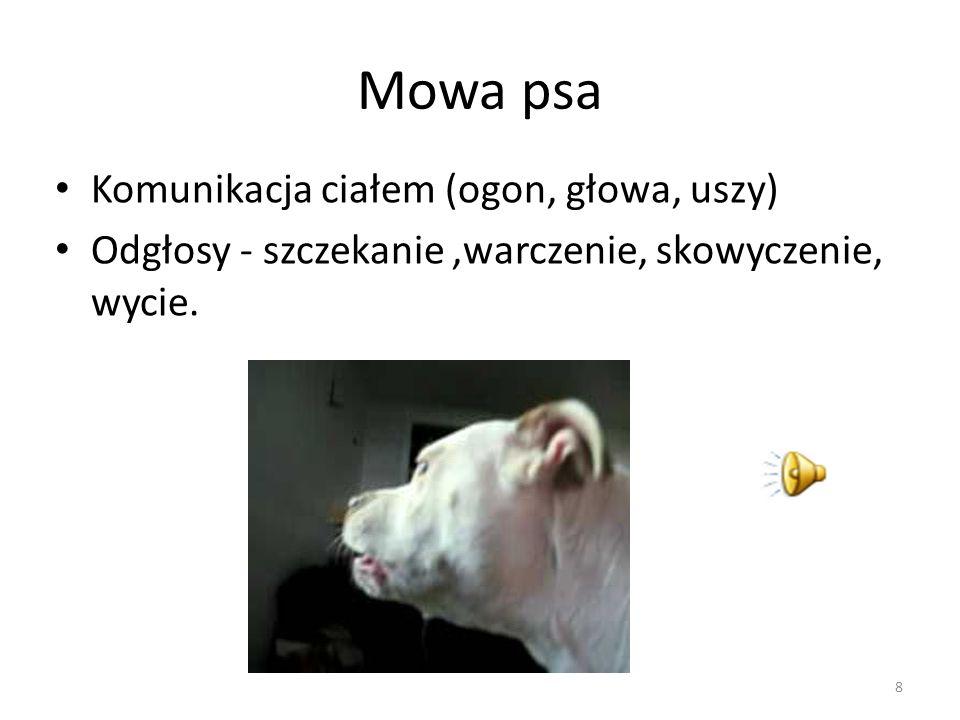 Mowa psa Komunikacja ciałem (ogon, głowa, uszy)