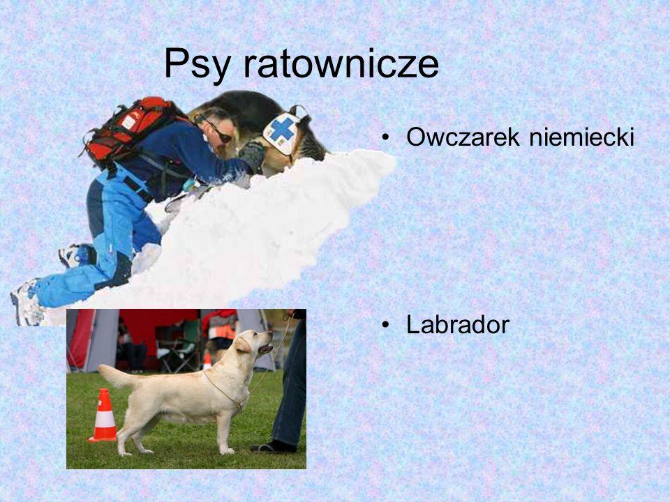 Psy ratownicze Owczarek niemiecki Labrador
