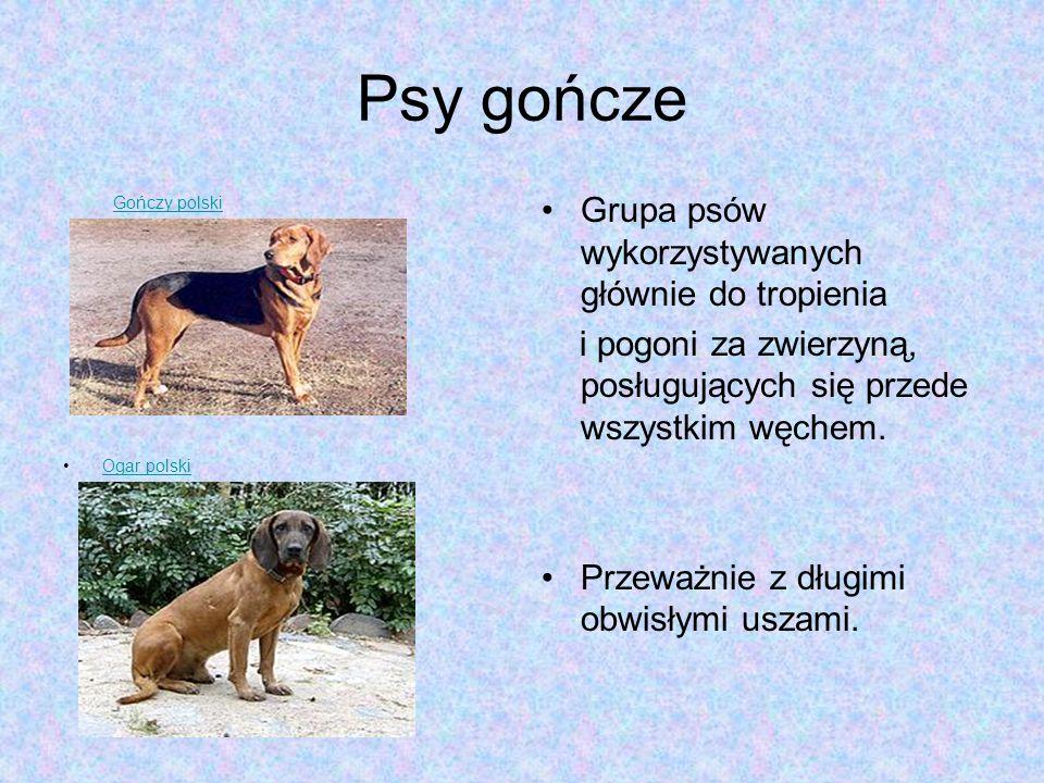 Psy gończe Grupa psów wykorzystywanych głównie do tropienia