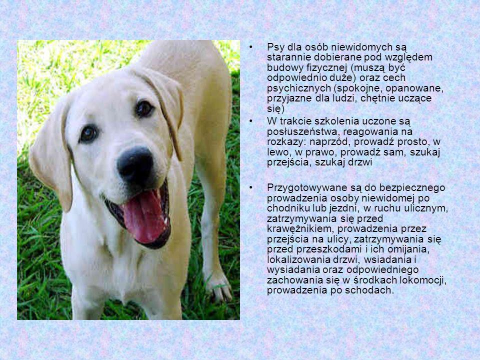 Psy dla osób niewidomych są starannie dobierane pod względem budowy fizycznej (muszą być odpowiednio duże) oraz cech psychicznych (spokojne, opanowane, przyjazne dla ludzi, chętnie uczące się)