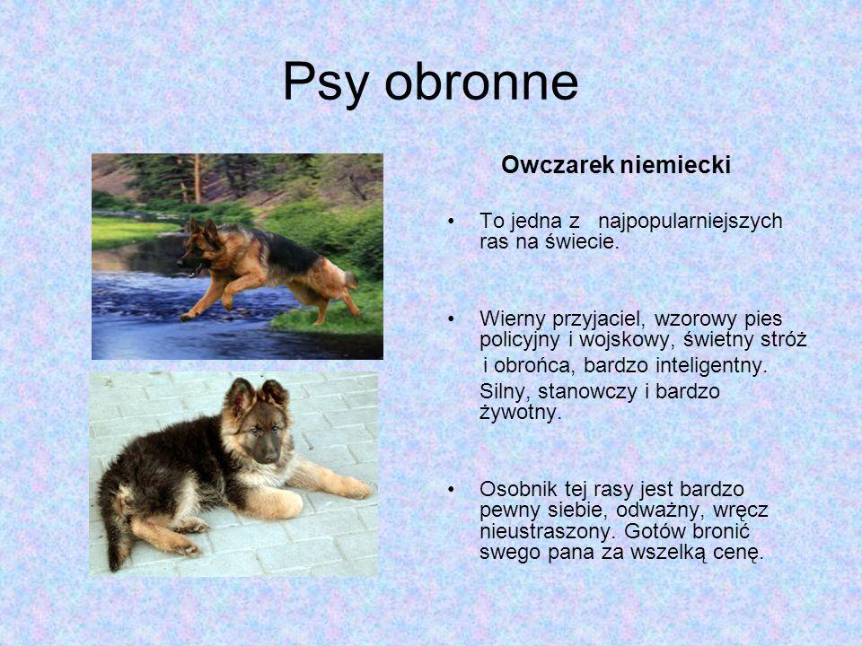 Psy obronne Owczarek niemiecki